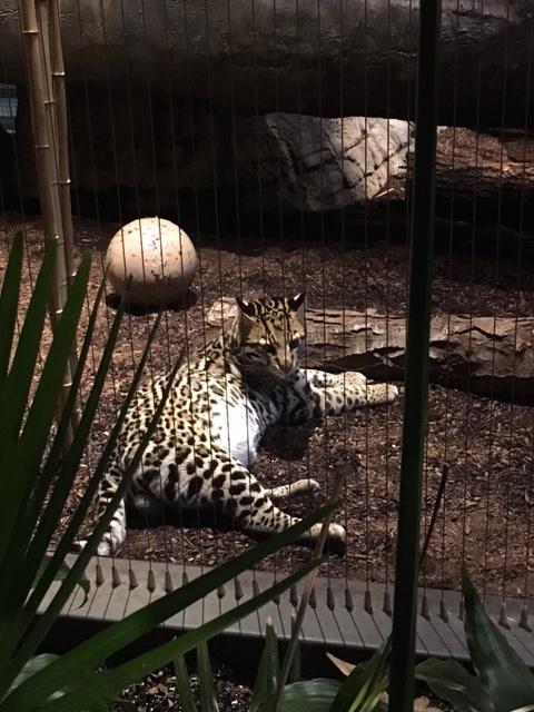 zoo-animal-tiger