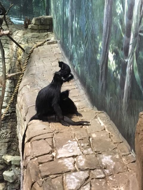 animal-zoo